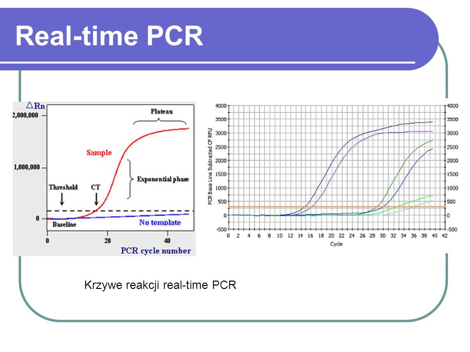 Real-time PCR Krzywe reakcji real-time PCR