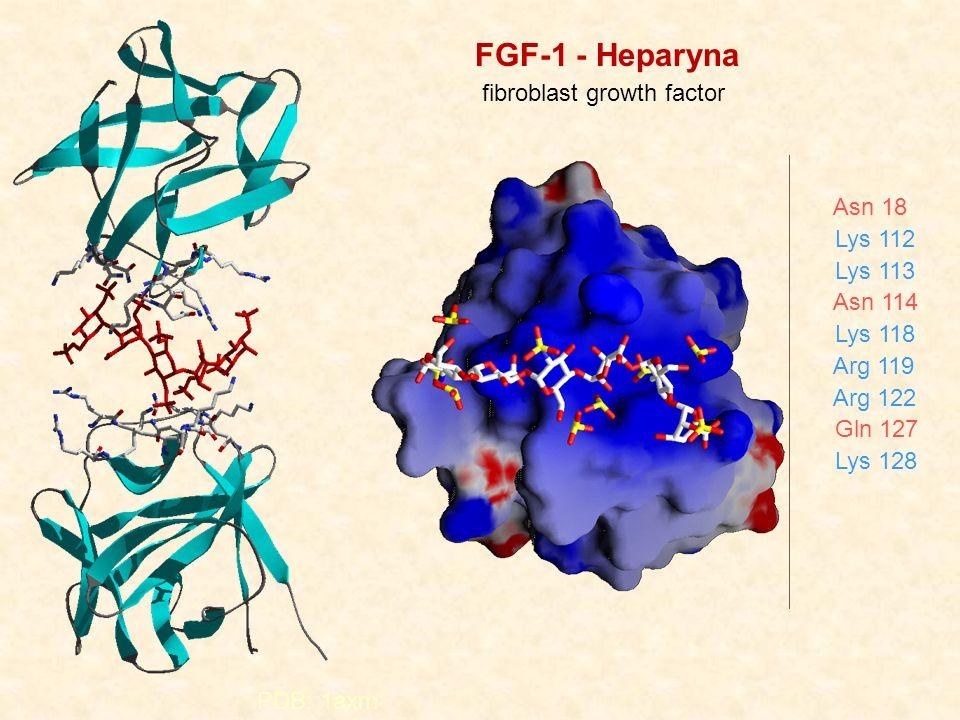 PDB: 1axm Asn 18 Lys 112 Lys 113 Asn 114 Lys 118 Arg 119 Arg 122 Gln 127 Lys 128 FGF-1 - Heparyna fibroblast growth factor