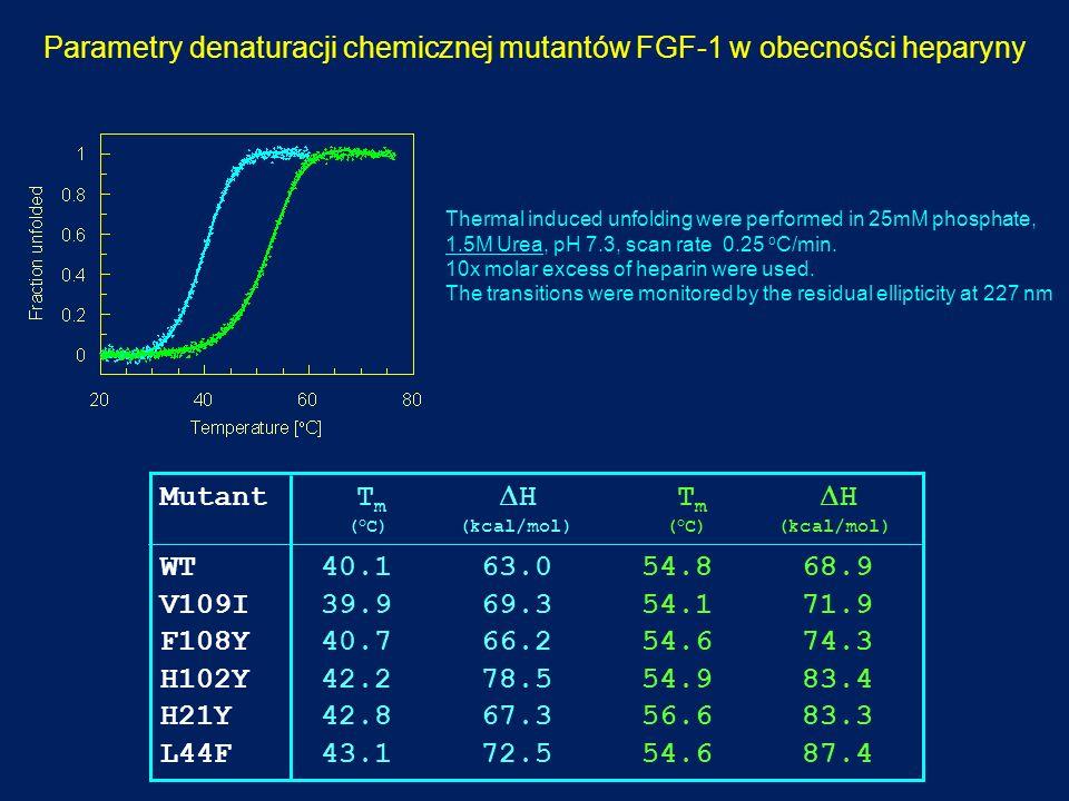 Parametry denaturacji chemicznej mutantów FGF-1 w obecności heparyny Mutant T m H T m H ( o C) (kcal/mol) ( o C) (kcal/mol) WT 40.1 63.0 54.8 68.9 V10