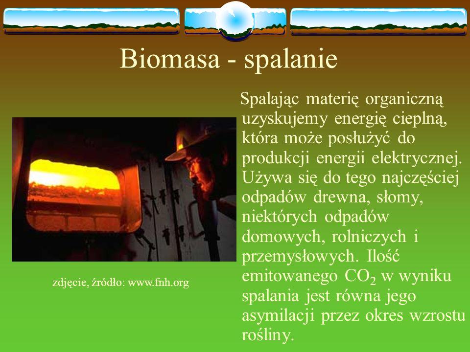 Biomasa - spalanie Spalając materię organiczną uzyskujemy energię cieplną, która może posłużyć do produkcji energii elektrycznej. Używa się do tego na