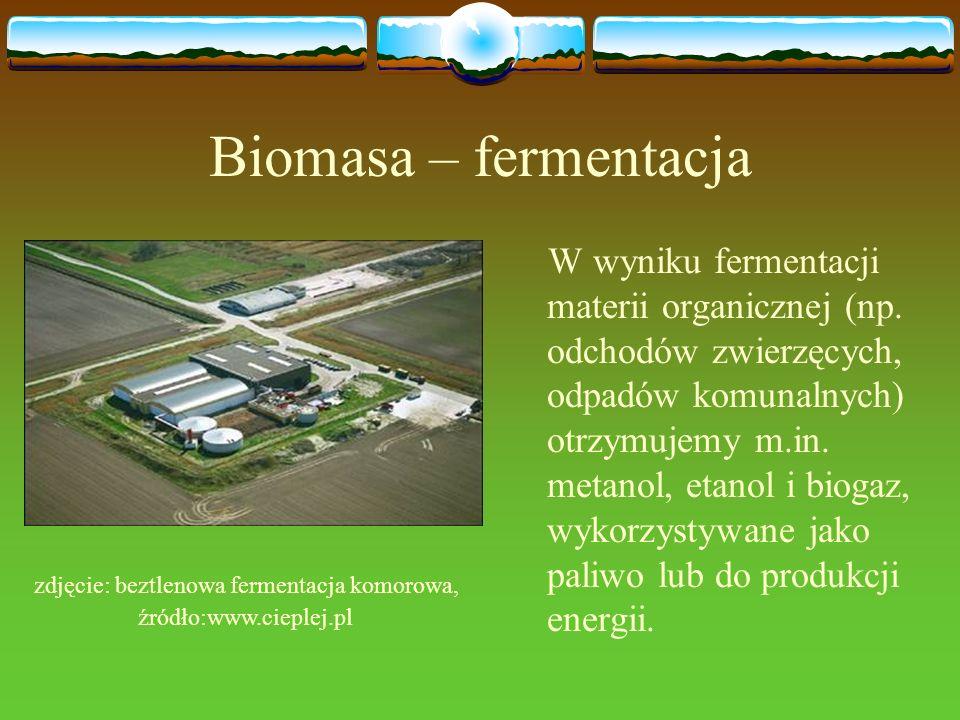 Biomasa – fermentacja W wyniku fermentacji materii organicznej (np. odchodów zwierzęcych, odpadów komunalnych) otrzymujemy m.in. metanol, etanol i bio