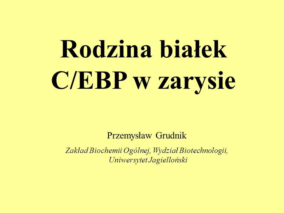 Rodzina białek C/EBP w zarysie Przemysław Grudnik Zakład Biochemii Ogólnej, Wydział Biotechnologii, Uniwersytet Jagielloński
