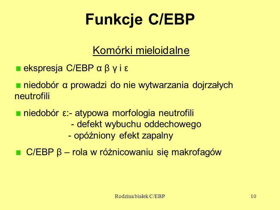 Rodzina białek C/EBP10 Funkcje C/EBP Komórki mieloidalne ekspresja C/EBP α β γ i ε niedobór α prowadzi do nie wytwarzania dojrzałych neutrofili niedobór ε:- atypowa morfologia neutrofili - defekt wybuchu oddechowego - opóźniony efekt zapalny C/EBP β – rola w różnicowaniu się makrofagów