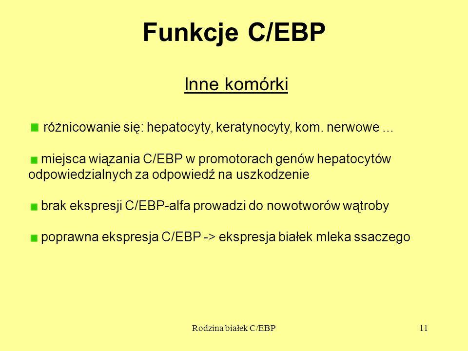 Rodzina białek C/EBP11 Funkcje C/EBP Inne komórki różnicowanie się: hepatocyty, keratynocyty, kom. nerwowe... miejsca wiązania C/EBP w promotorach gen