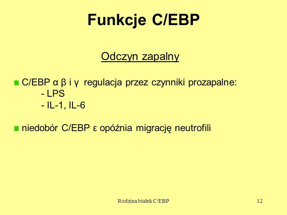 Rodzina białek C/EBP12 Funkcje C/EBP Odczyn zapalny C/EBP α β i γ regulacja przez czynniki prozapalne: - LPS - IL-1, IL-6 niedobór C/EBP ε opóźnia mig