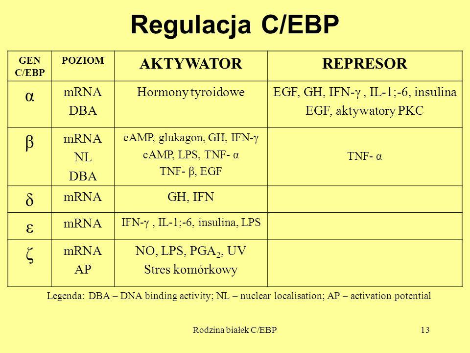 Rodzina białek C/EBP13 Regulacja C/EBP GEN C/EBP POZIOM AKTYWATORREPRESOR α mRNA DBA Hormony tyroidoweEGF, GH, IFN-γ, IL-1;-6, insulina EGF, aktywator