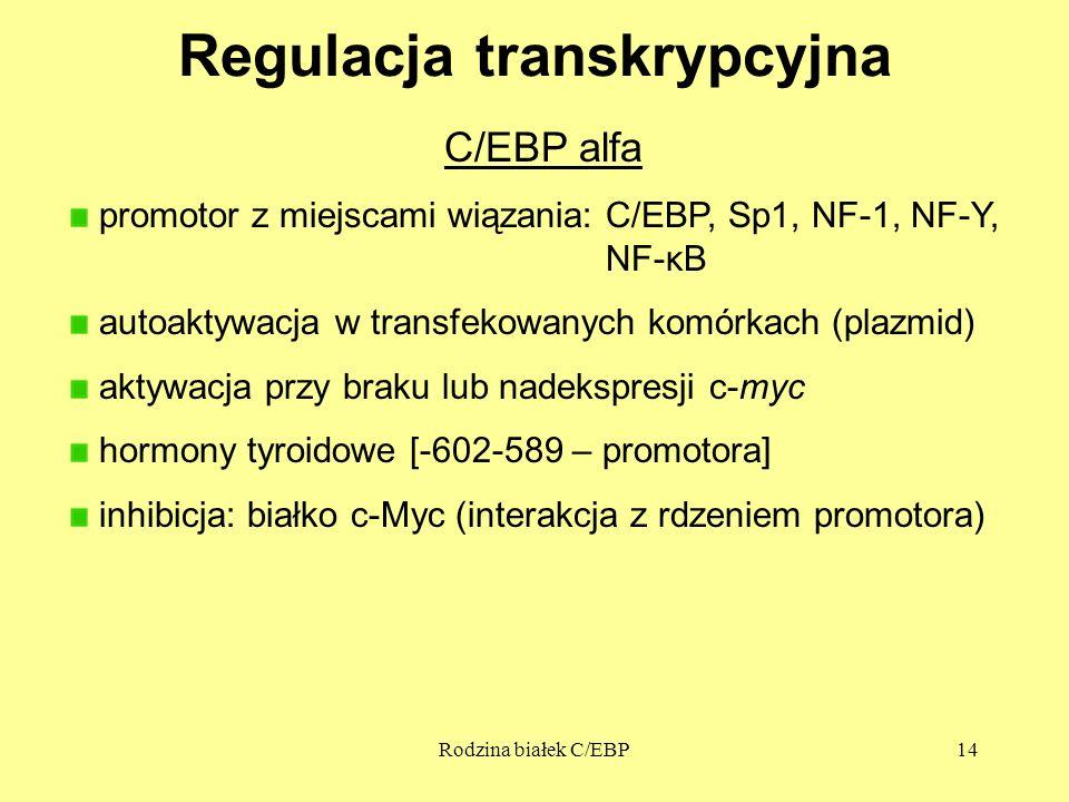Rodzina białek C/EBP14 Regulacja transkrypcyjna C/EBP alfa promotor z miejscami wiązania: C/EBP, Sp1, NF-1, NF-Y, NF-κB autoaktywacja w transfekowanych komórkach (plazmid) aktywacja przy braku lub nadekspresji c-myc hormony tyroidowe [-602-589 – promotora] inhibicja: białko c-Myc (interakcja z rdzeniem promotora)