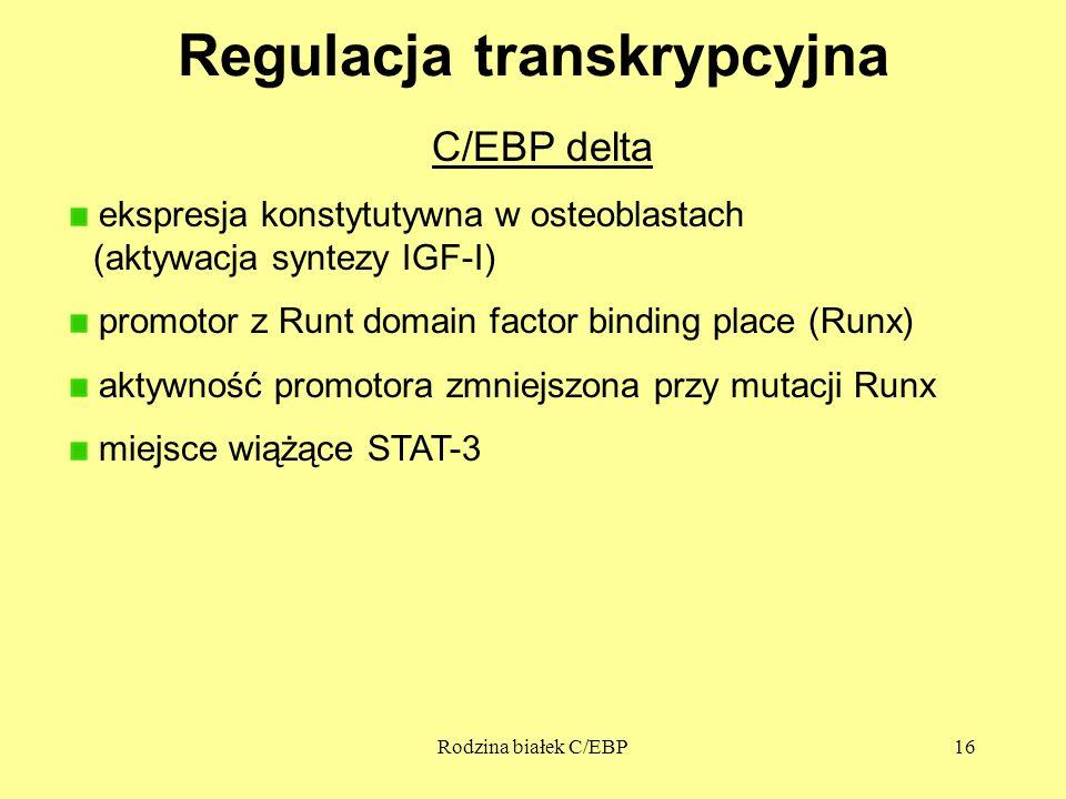 Rodzina białek C/EBP16 Regulacja transkrypcyjna C/EBP delta ekspresja konstytutywna w osteoblastach (aktywacja syntezy IGF-I) promotor z Runt domain factor binding place (Runx) aktywność promotora zmniejszona przy mutacji Runx miejsce wiążące STAT-3
