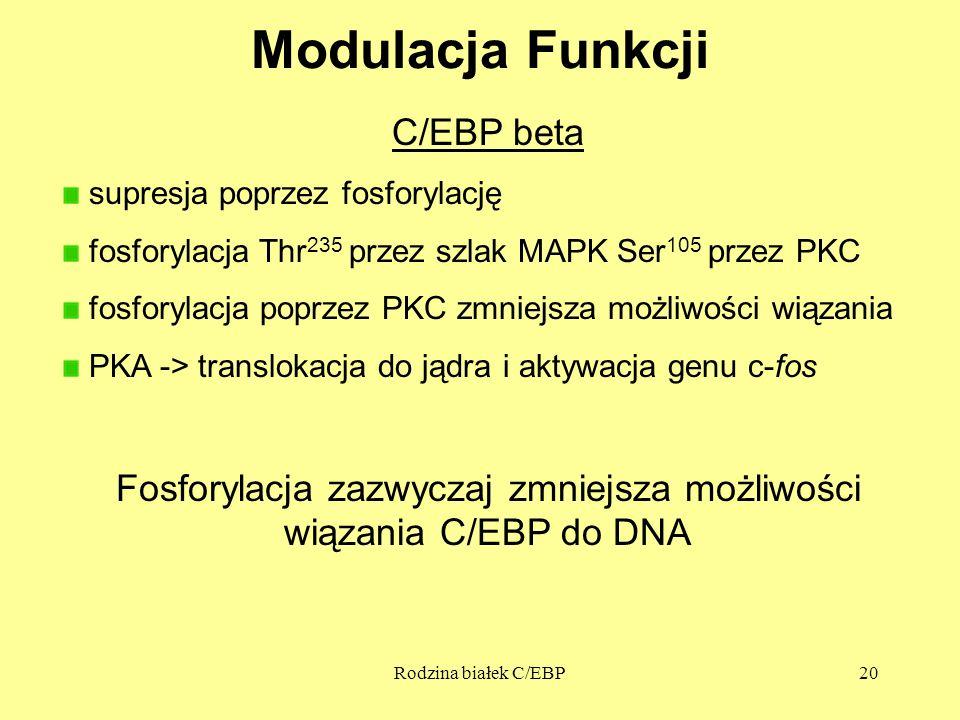 Rodzina białek C/EBP20 Modulacja Funkcji C/EBP beta supresja poprzez fosforylację fosforylacja Thr 235 przez szlak MAPK Ser 105 przez PKC fosforylacja