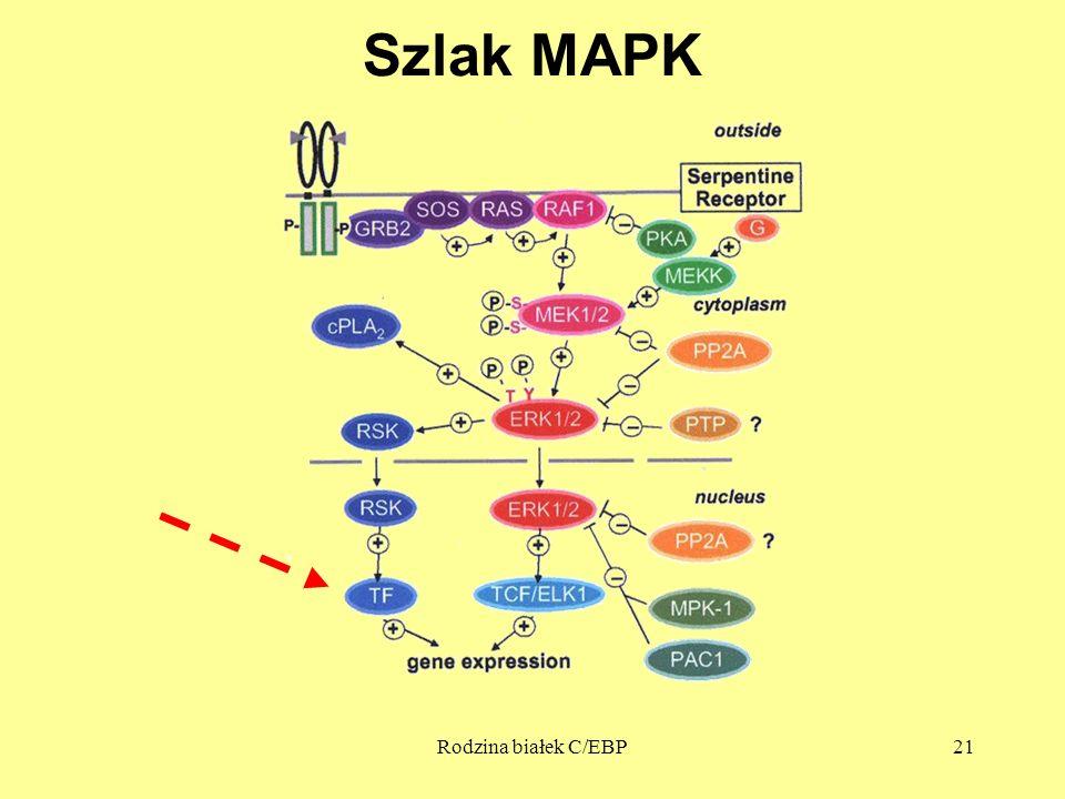 Rodzina białek C/EBP21 Szlak MAPK