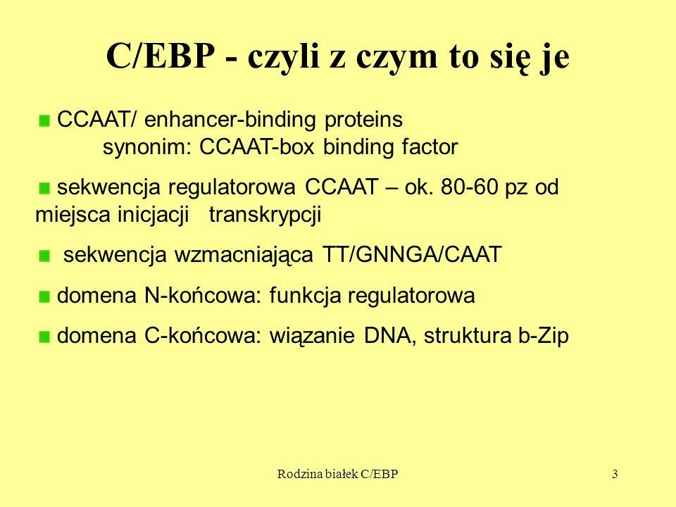 Rodzina białek C/EBP3 C/EBP - czyli z czym to się je CCAAT/ enhancer-binding proteins synonim: CCAAT-box binding factor sekwencja regulatorowa CCAAT – ok.