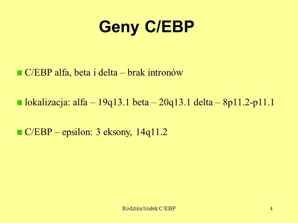Rodzina białek C/EBP4 Geny C/EBP C/EBP alfa, beta i delta – brak intronów lokalizacja: alfa – 19q13.1 beta – 20q13.1 delta – 8p11.2-p11.1 C/EBP – epsi