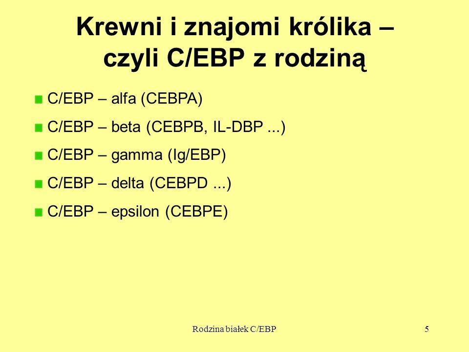 Rodzina białek C/EBP5 Krewni i znajomi królika – czyli C/EBP z rodziną C/EBP – alfa (CEBPA) C/EBP – beta (CEBPB, IL-DBP...) C/EBP – gamma (Ig/EBP) C/E