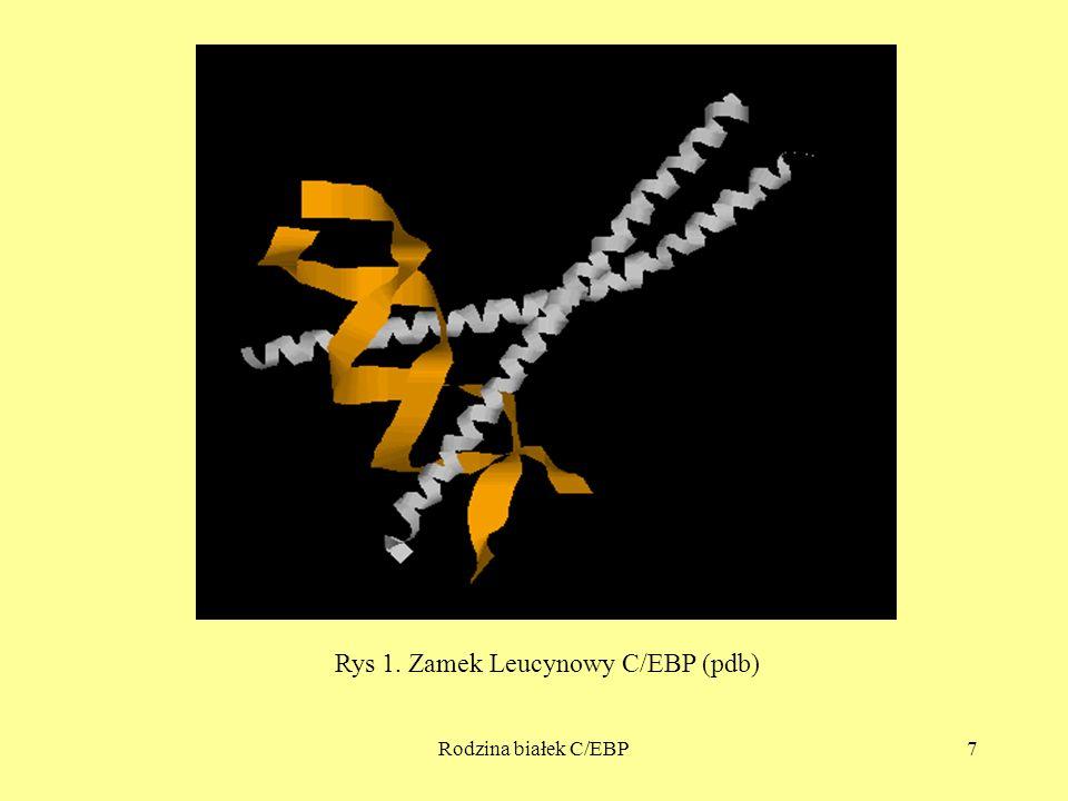 Rodzina białek C/EBP7 Rys 1. Zamek Leucynowy C/EBP (pdb)