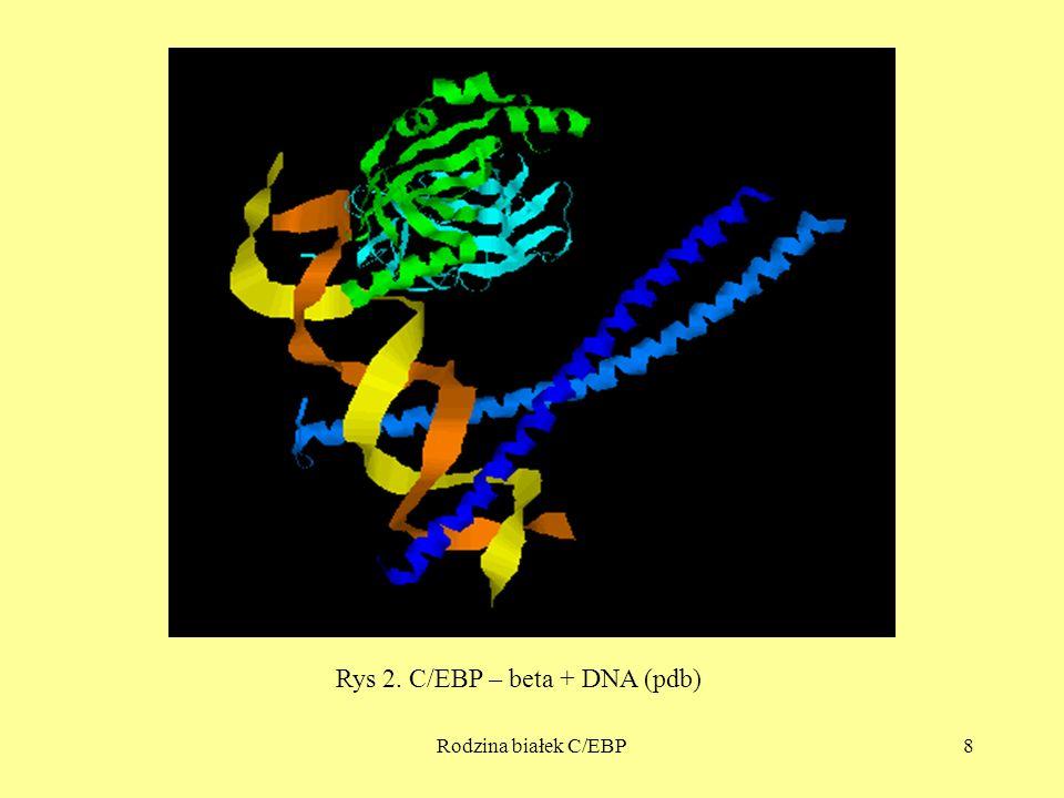 Rodzina białek C/EBP8 Rys 2. C/EBP – beta + DNA (pdb)