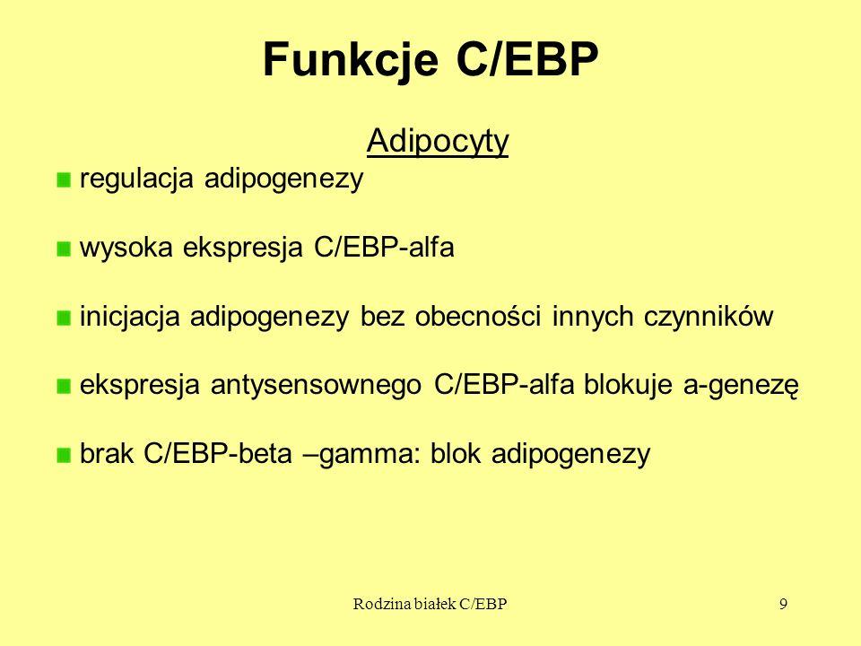 Rodzina białek C/EBP9 Funkcje C/EBP Adipocyty regulacja adipogenezy wysoka ekspresja C/EBP-alfa inicjacja adipogenezy bez obecności innych czynników ekspresja antysensownego C/EBP-alfa blokuje a-genezę brak C/EBP-beta –gamma: blok adipogenezy