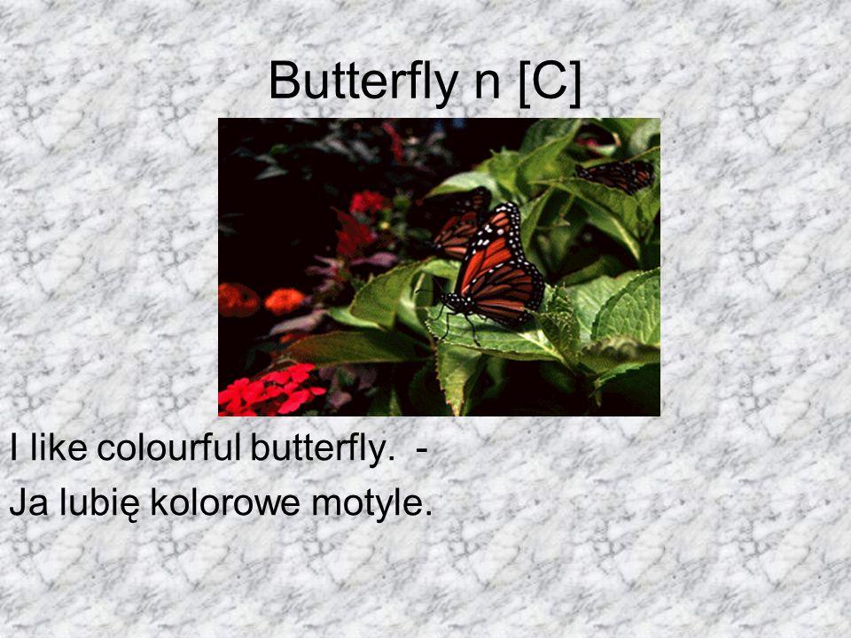 Butterfly n [C] I like colourful butterfly. - Ja lubię kolorowe motyle.