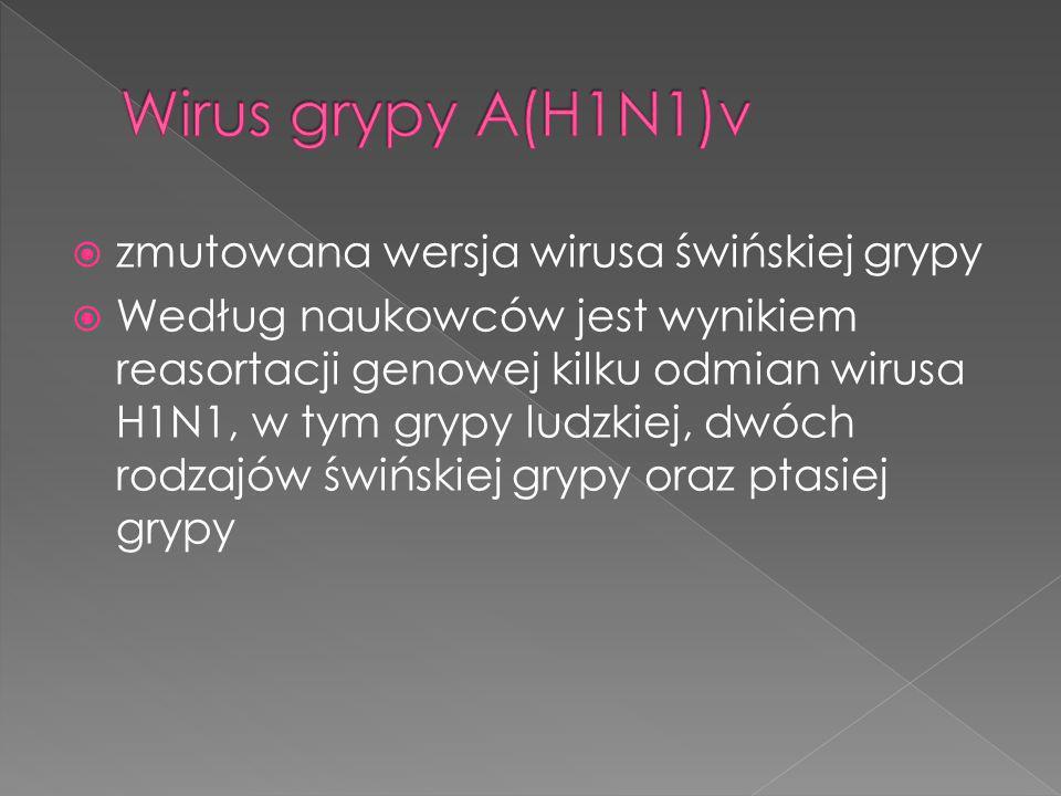 zmutowana wersja wirusa świńskiej grypy Według naukowców jest wynikiem reasortacji genowej kilku odmian wirusa H1N1, w tym grypy ludzkiej, dwóch rodza