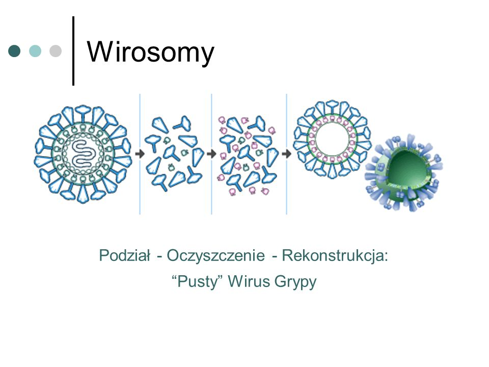 influenza virussurface glyco- proteins addition of phospholipids elimination of detergent: spontaneous formation of the wirosome Wirosomy Podział - Oc