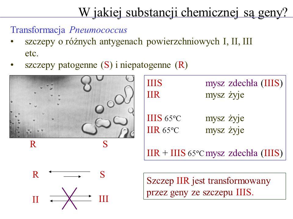 Transformacja Pneumococcus szczepy o różnych antygenach powierzchniowych I, II, III etc. szczepy patogenne (S) i niepatogenne (R) W jakiej substancji