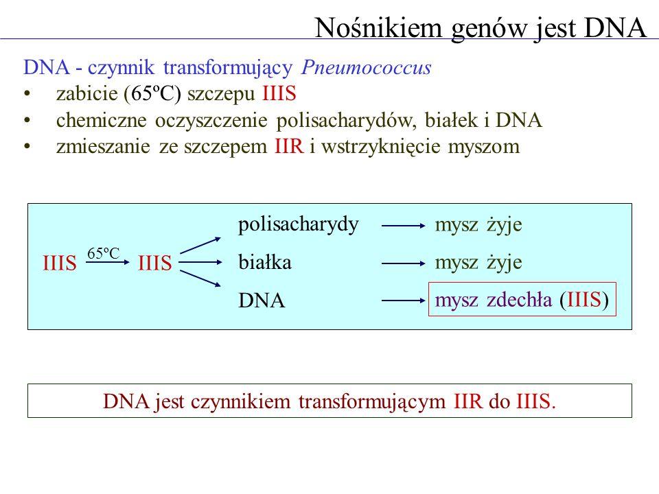 DNA - czynnik transformujący Pneumococcus zabicie (65ºC) szczepu IIIS chemiczne oczyszczenie polisacharydów, białek i DNA zmieszanie ze szczepem IIR i