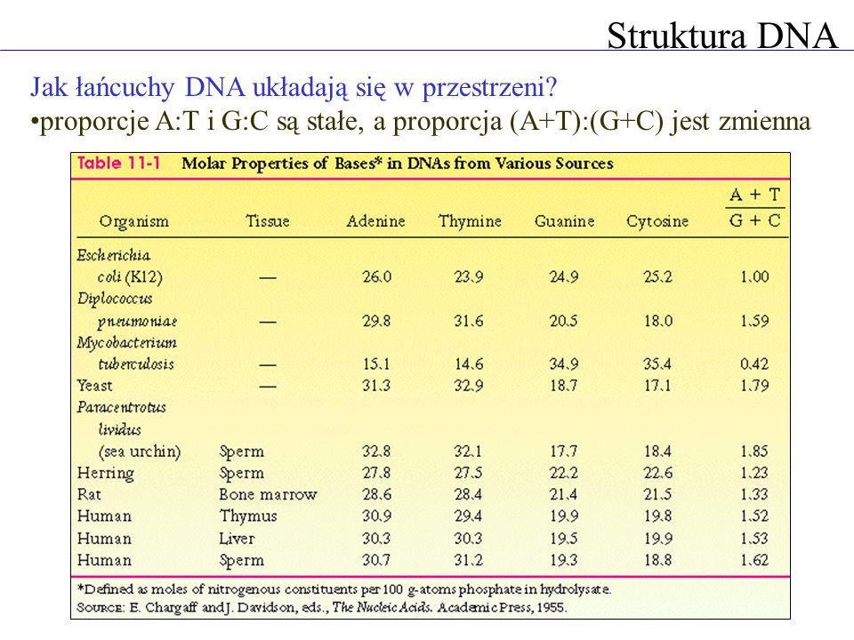 Struktura DNA Jak łańcuchy DNA układają się w przestrzeni? proporcje A:T i G:C są stałe, a proporcja (A+T):(G+C) jest zmienna
