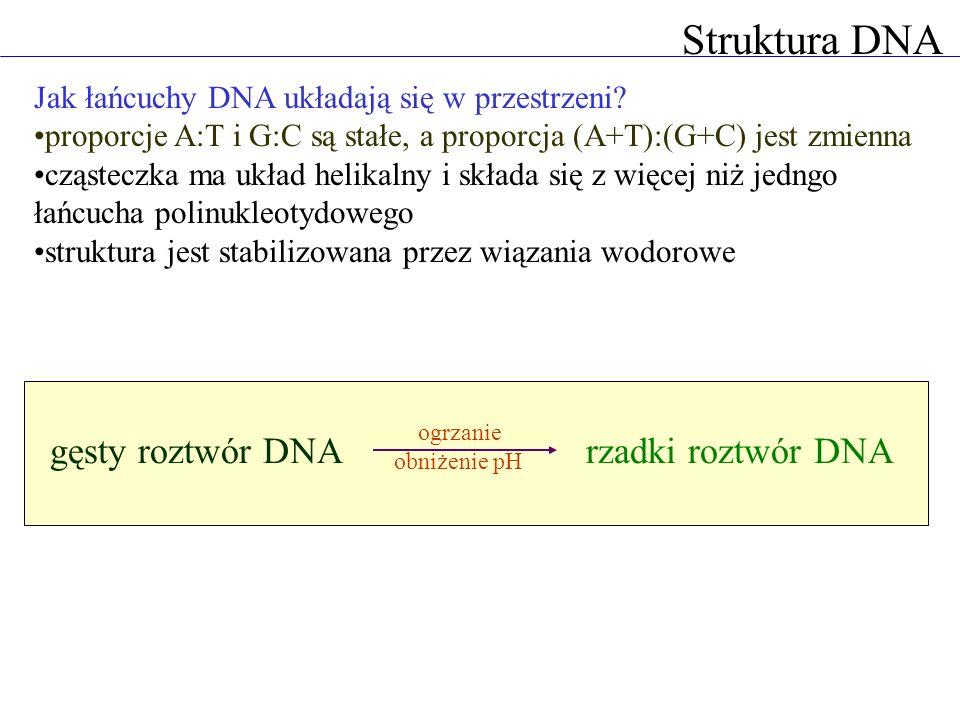 Struktura DNA Jak łańcuchy DNA układają się w przestrzeni? proporcje A:T i G:C są stałe, a proporcja (A+T):(G+C) jest zmienna cząsteczka ma układ heli