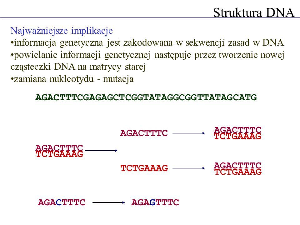 Struktura DNA Najważniejsze implikacje informacja genetyczna jest zakodowana w sekwencji zasad w DNA powielanie informacji genetycznej następuje przez tworzenie nowej cząsteczki DNA na matrycy starej zamiana nukleotydu - mutacja AGACTTTCGAGAGCTCGGTATAGGCGGTTATAGCATG AGACTTTC TCTGAAAG AGACTTTC TCTGAAAG AGACTTTC TCTGAAAG AGACTTTC AGAGTTTC
