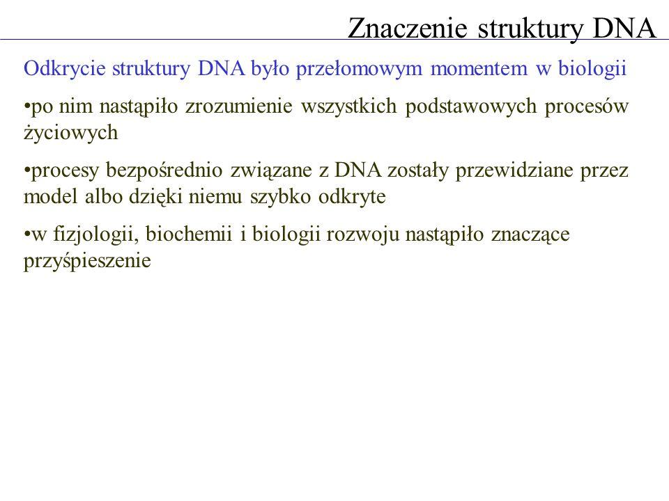 Znaczenie struktury DNA Odkrycie struktury DNA było przełomowym momentem w biologii po nim nastąpiło zrozumienie wszystkich podstawowych procesów życiowych procesy bezpośrednio związane z DNA zostały przewidziane przez model albo dzięki niemu szybko odkryte w fizjologii, biochemii i biologii rozwoju nastąpiło znaczące przyśpieszenie