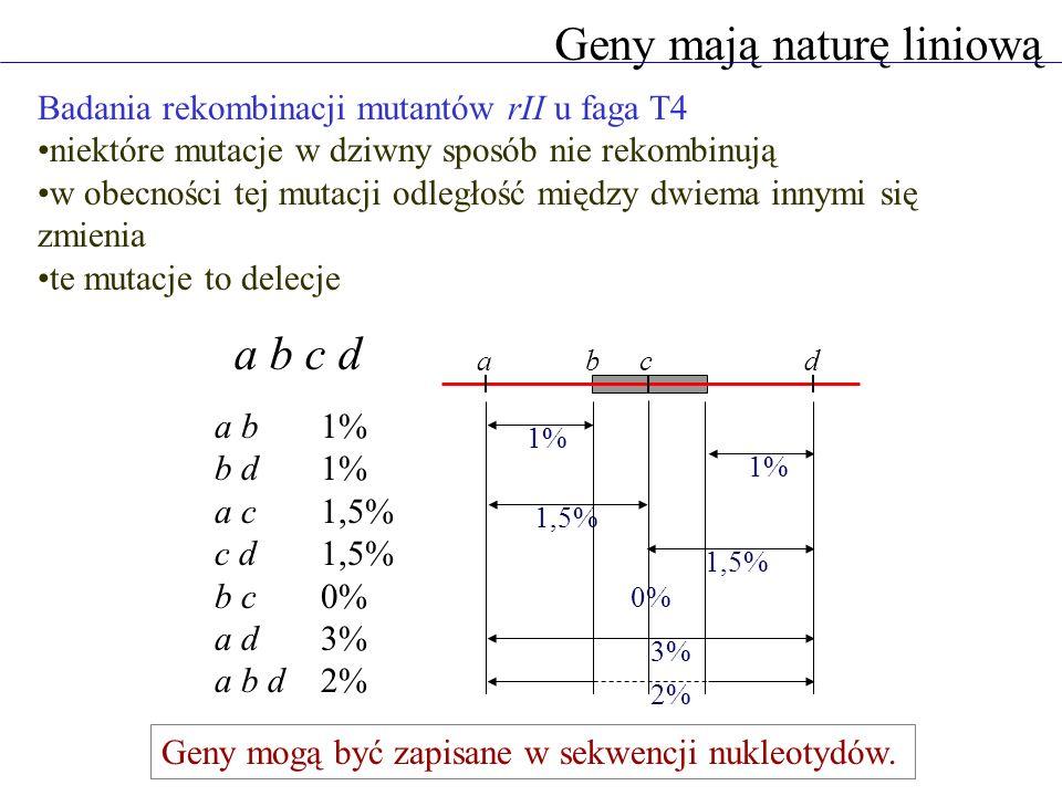 Geny mają naturę liniową Badania rekombinacji mutantów rII u faga T4 niektóre mutacje w dziwny sposób nie rekombinują w obecności tej mutacji odległość między dwiema innymi się zmienia te mutacje to delecje abcd 1,5% 0% 2% a b c d a b1% b d1% a c1,5% c d1,5% b c0% a d3% a b d2% 1% 1,5% 3% Geny mogą być zapisane w sekwencji nukleotydów.