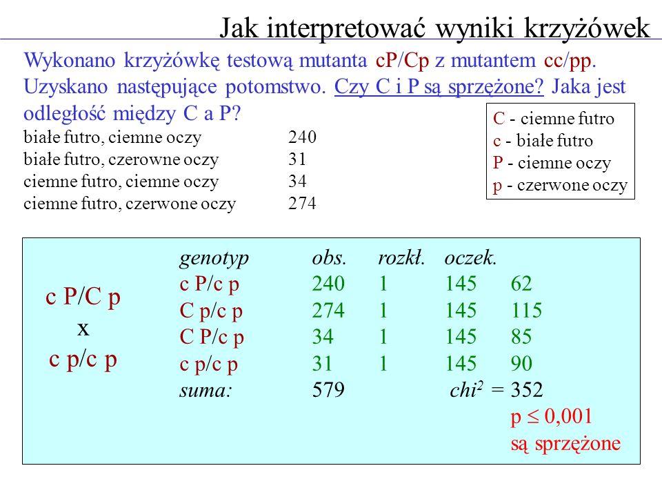 Jak interpretować wyniki krzyżówek Wykonano krzyżówkę testową mutanta cP/Cp z mutantem cc/pp. Uzyskano następujące potomstwo. Czy C i P są sprzężone?