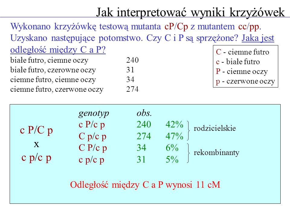 Jak interpretować wyniki krzyżówek Wykonano krzyżówkę testową mutanta cP/Cp z mutantem cc/pp.