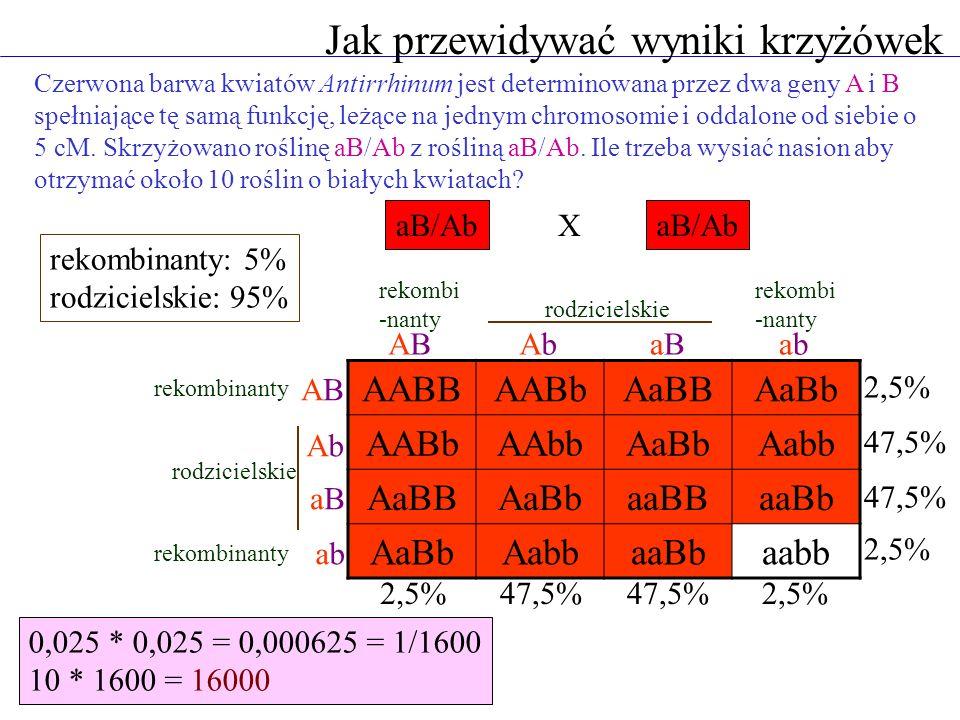Jak przewidywać wyniki krzyżówek Czerwona barwa kwiatów Antirrhinum jest determinowana przez dwa geny A i B spełniające tę samą funkcję, leżące na jed