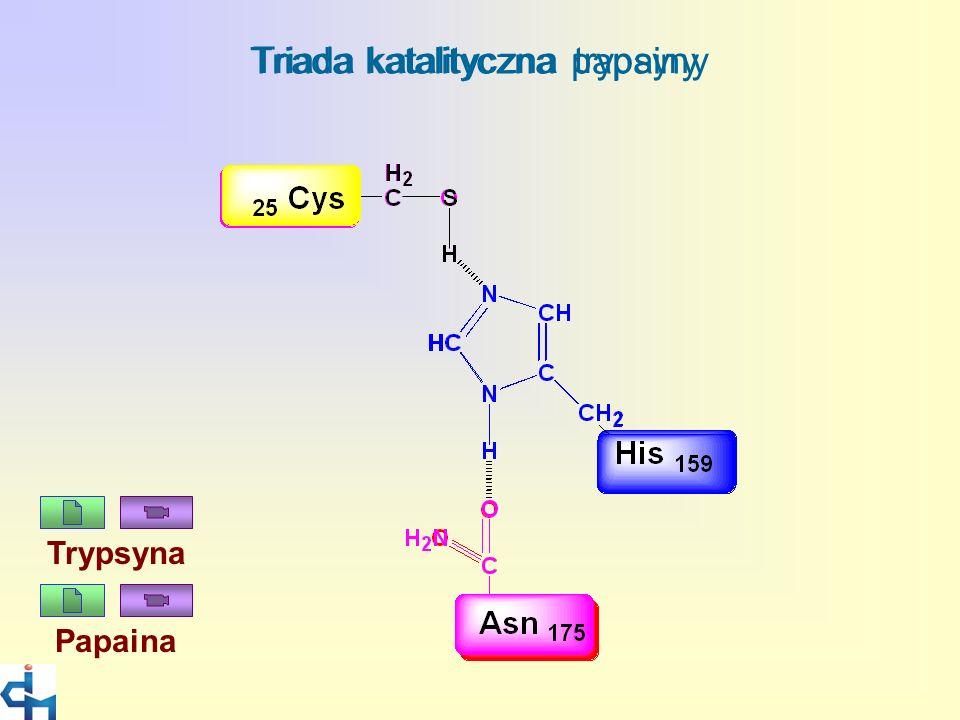 Jacek Leluk, Interdisciplinary Centre for Mathematical and Computational Modelling, Warsaw University Triada katalityczna trypsyny Triada katalityczna