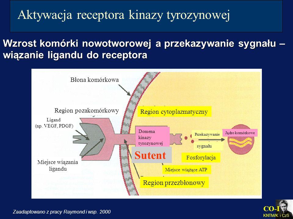 CO-I KNTM/K i CzS Aktywacja receptora kinazy tyrozynowej Wzrost komórki nowotworowej a przekazywanie sygnału – wiązanie ligandu do receptora Wzrost ko