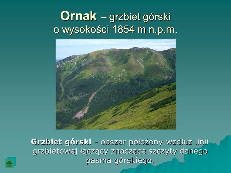 Ornak – grzbiet górski o wysokości 1854 m n.p.m. Grzbiet górski - obszar położony wzdłuż linii grzbietowej łączący znaczące szczyty danego pasma górsk