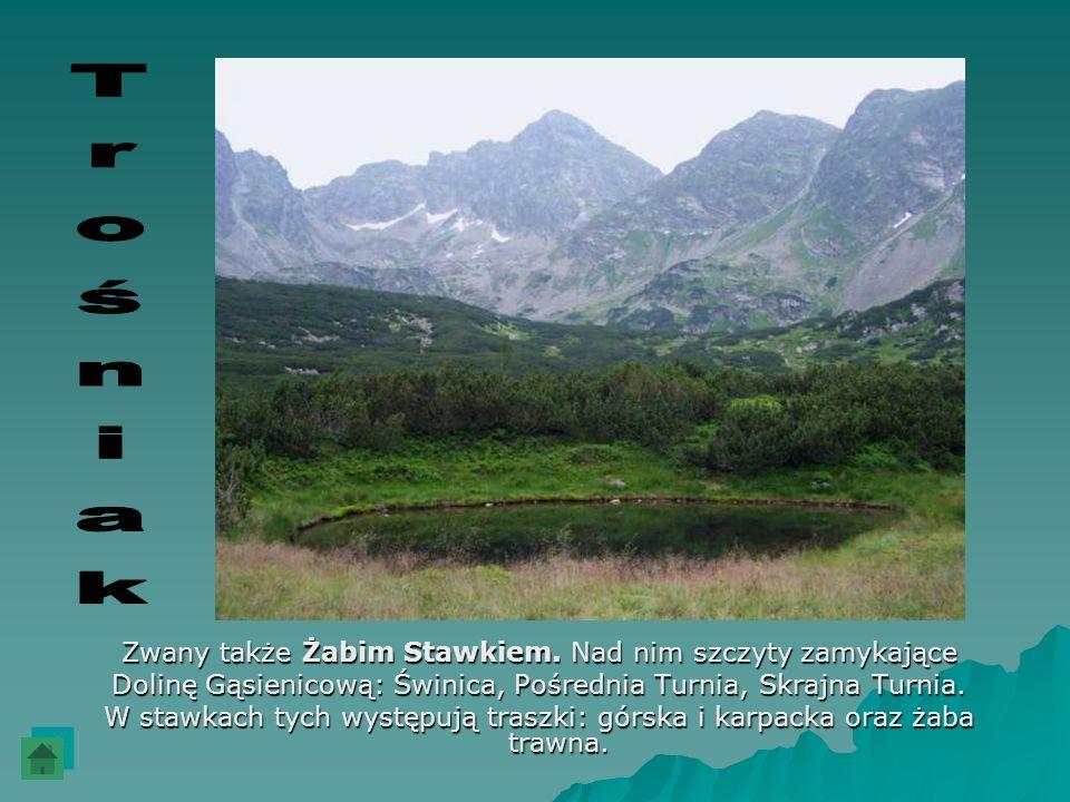 Zwany także Żabim Stawkiem. Nad nim szczyty zamykające Dolinę Gąsienicową: Świnica, Pośrednia Turnia, Skrajna Turnia. W stawkach tych występują traszk