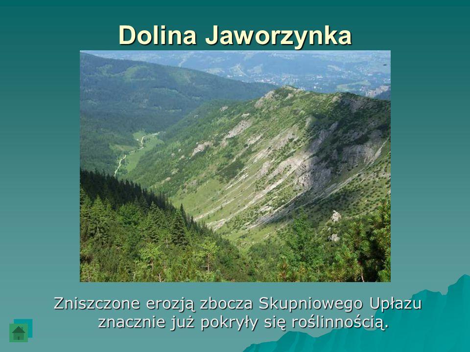 Dolina Jaworzynka Zniszczone erozją zbocza Skupniowego Upłazu znacznie już pokryły się roślinnością. Zniszczone erozją zbocza Skupniowego Upłazu znacz