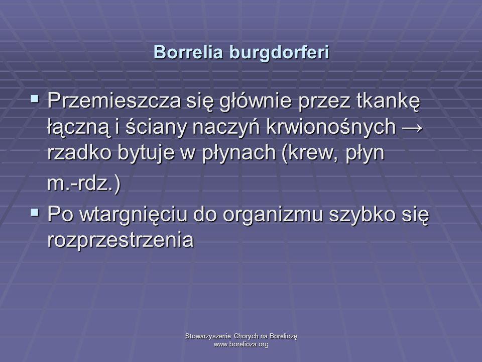 Stowarzyszenie Chorych na Boreliozę www.borelioza.org Borrelia burgdorferi Przemieszcza się głównie przez tkankę łączną i ściany naczyń krwionośnych r