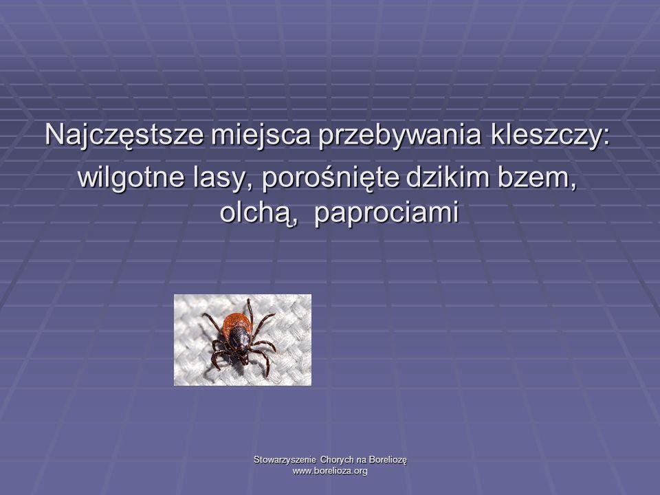 Stowarzyszenie Chorych na Boreliozę www.borelioza.org Najczęstsze miejsca przebywania kleszczy: wilgotne lasy, porośnięte dzikim bzem, olchą, paprocia