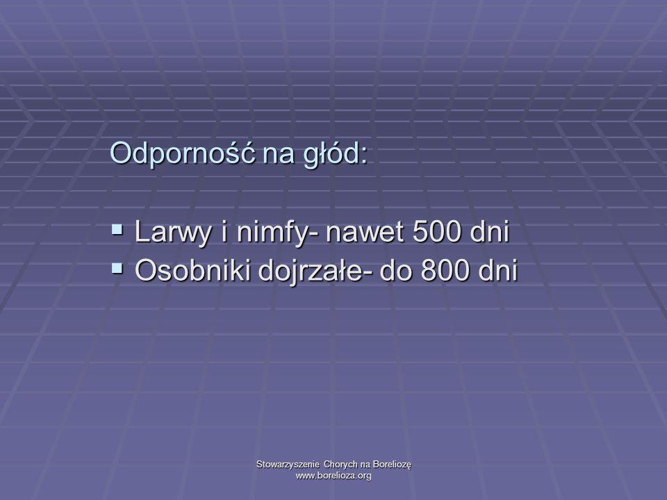 Stowarzyszenie Chorych na Boreliozę www.borelioza.org Odporność na głód: Larwy i nimfy- nawet 500 dni Larwy i nimfy- nawet 500 dni Osobniki dojrzałe-