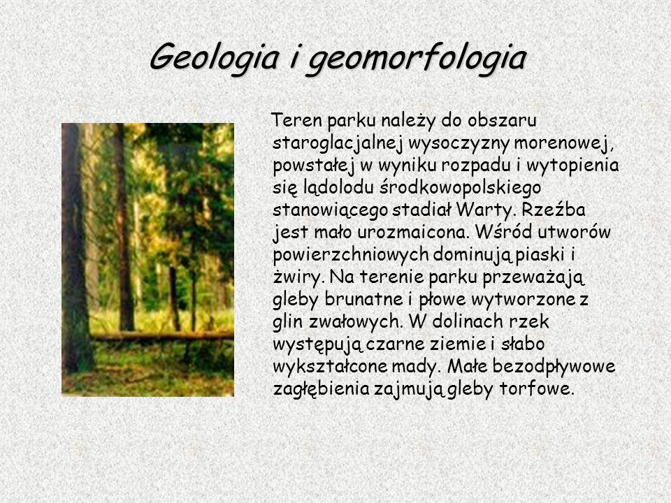 Geologia i geomorfologia Teren parku należy do obszaru staroglacjalnej wysoczyzny morenowej, powstałej w wyniku rozpadu i wytopienia się lądolodu środ