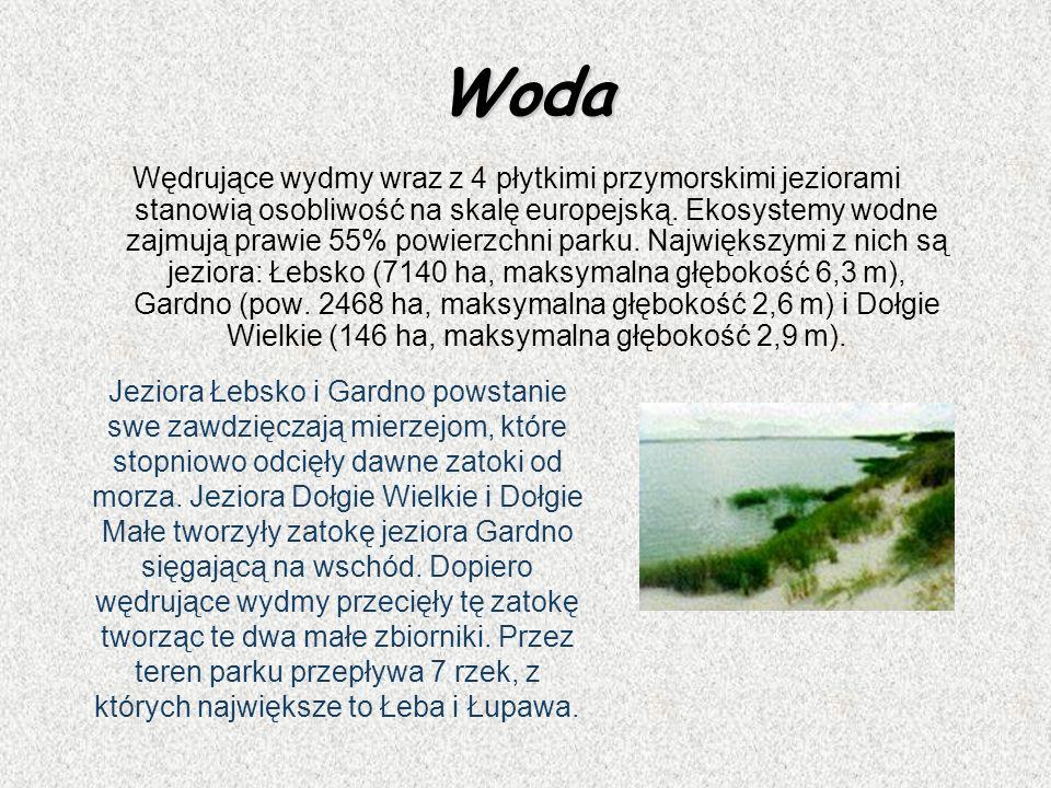 Woda Wędrujące wydmy wraz z 4 płytkimi przymorskimi jeziorami stanowią osobliwość na skalę europejską. Ekosystemy wodne zajmują prawie 55% powierzchni