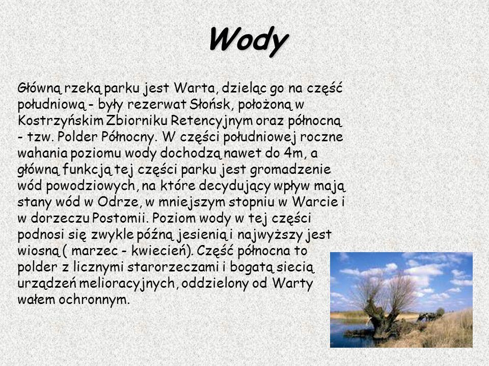 Wody Główną rzeką parku jest Warta, dzieląc go na część południową - były rezerwat Słońsk, położoną w Kostrzyńskim Zbiorniku Retencyjnym oraz północną