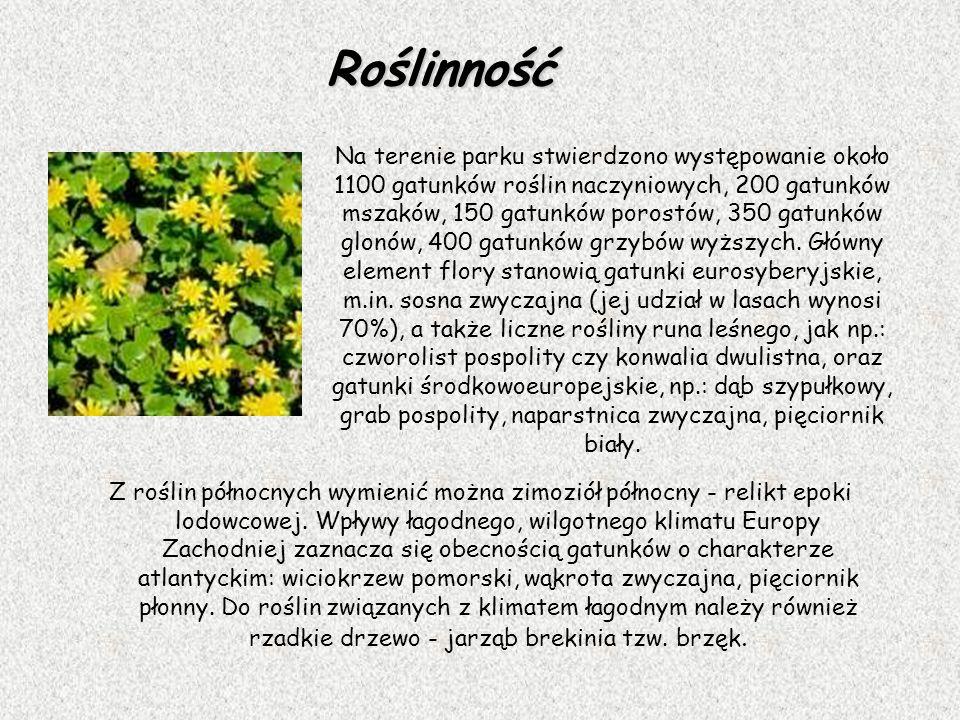 Roślinność Z roślin północnych wymienić można zimoziół północny - relikt epoki lodowcowej. Wpływy łagodnego, wilgotnego klimatu Europy Zachodniej zazn