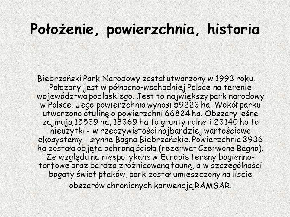 Położenie, powierzchnia, historia Biebrzański Park Narodowy został utworzony w 1993 roku. Położony jest w północno-wschodniej Polsce na terenie wojewó