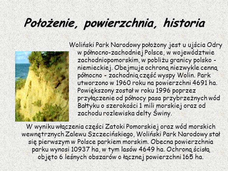 Położenie, powierzchnia, historia Woliński Park Narodowy położony jest u ujścia Odry w północno-zachodniej Polsce, w województwie zachodniopomorskim,