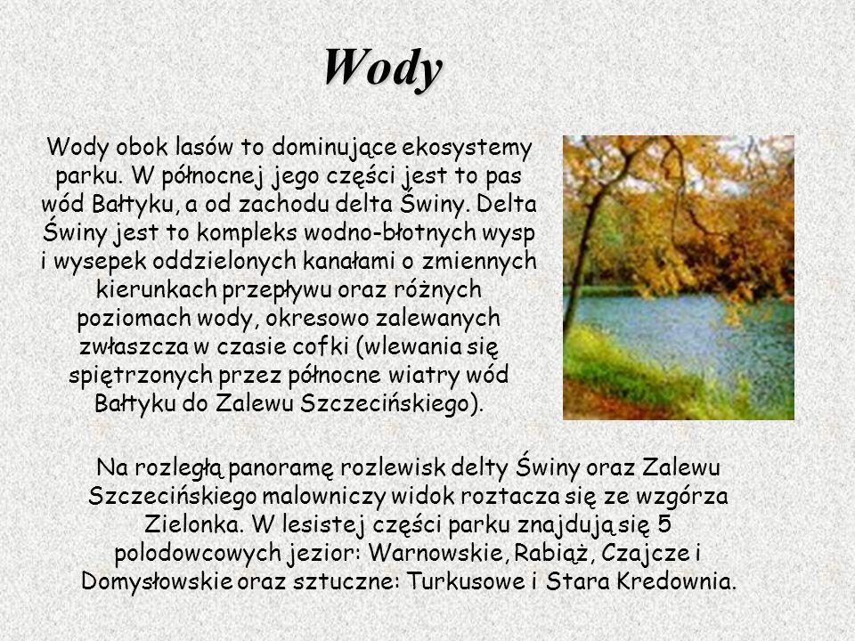 Wody Na rozległą panoramę rozlewisk delty Świny oraz Zalewu Szczecińskiego malowniczy widok roztacza się ze wzgórza Zielonka. W lesistej części parku