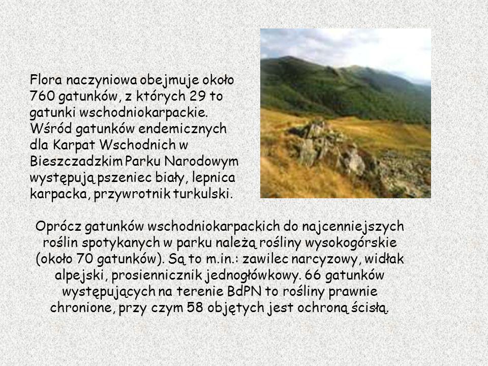 Flora naczyniowa obejmuje około 760 gatunków, z których 29 to gatunki wschodniokarpackie. Wśród gatunków endemicznych dla Karpat Wschodnich w Bieszcza