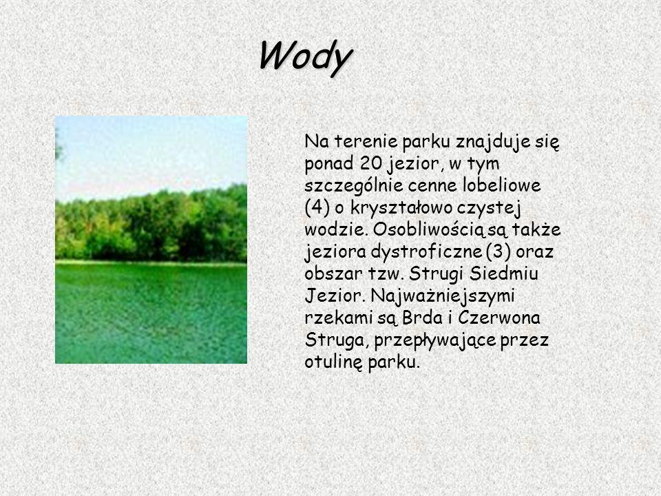Wody Na terenie parku znajduje się ponad 20 jezior, w tym szczególnie cenne lobeliowe (4) o kryształowo czystej wodzie. Osobliwością są także jeziora